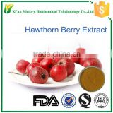 Factory supply hawthorn berry extract powder