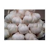New Crop Fresh Pure White Garlic 5cm 5.5cm for Southeast Asia , Middle East