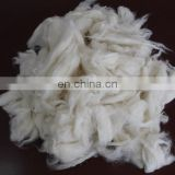 sheep wool open tops white for woolen spinning