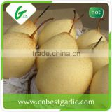 20 years experience chinese bulk kinds fruit fresh ya pear
