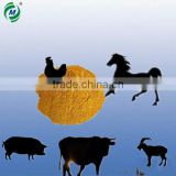High quality corn gluten meal 60% for animal feed