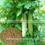 Momordica Charantia Saponins Extract Weight Loss Bitter Melon Extract Bitter Melon Extract/20% Total Saponins