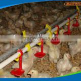 Automatic Chain feeding system poultry equipment for breeders