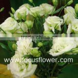 Long Time Preserved Exquisite Fresh Cut Flower Color Lisianthus Hot Sale Fresh Cut Flower Color Lisianthus From Yunnan, China