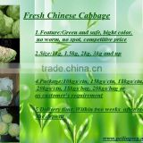 2013 New Crop Chinese Round Cabbage
