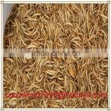 bird feeder/bulk chicken feed/dried insects