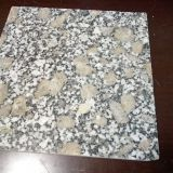 G383 Granite Cheapest Pearl Flower Granite Tile/Slab/Cube