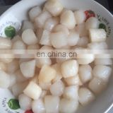 Frozen scallop meat sea scallop bay scallop prices