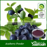 YuenSun Quality Acai berry Powder