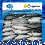 Block Frozen Whole Round Mackerel Fish