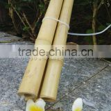 hollow Guadua Bamboo Poles can be split