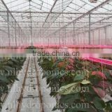 LED Grow Light for Greenhouse, Grow Tent and Hydroponic System