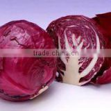 Natural food color Red Cabbage powder