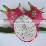 Fresh Dragon Fruit from Vietnam