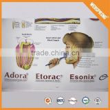 Wholesale biological teaching human chart
