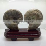Natural High Quality Ammonite Fossil Slice For Sale