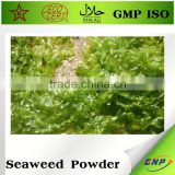 dried agar agar seaweed powder price