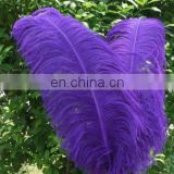 wholesale 55-60cm ostrich feather for party