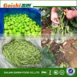 2016 new product frozen bulk soy green beans
