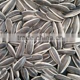 Inner Mongolia Sunflower Seeds 601 With Good Price