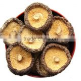 sell dried shiitake mushrooms