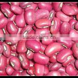 2013 new crop Red cowpeas beans