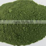 High protein raw green chlorella powder supply in wholesale bulk