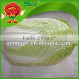 chinese cabbage fresh green-yellow cabbage sour cabbage