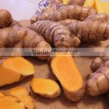 Best price Fresh Turmeric Root from Vietnam