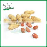 Fresh peanut/Peanut/Peanut in good price