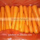 2016 chinese fresh carrot