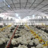 2015 Professional automatic feeding equipment automatic poultry feeder for broiler and breeder