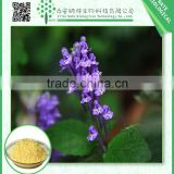 Hot Sale Organic Scutellaria Baicalensis Extract Powder with 85% 90% Baicalin