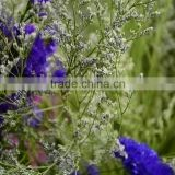 Cut Fresh hot sell wholesale fresh flowers cut foliage