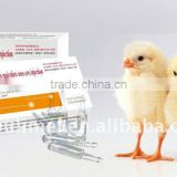 Andrographis Paniculata Nees (APN) Injection with Veterinary Medicine with Poultry Medicine