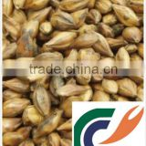 Beer additives Barley malt extract