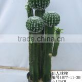 Fake artificial plastic cactus ball