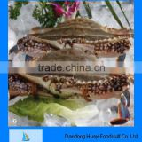 Fresh frozen high quality blue crab in new season                                                                         Quality Choice