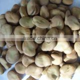 new crop factory supplier fava beans cheap Best Price Broad Bean