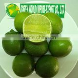 HIGH QUALITY FRESH LIME WITH BEST PRICE, FOR NOW !