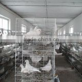 The New Type metal Racing Pigeon Cage Breeding