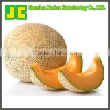 Sell 100% natural Dried Hami Melon Extract Powder in 5:1&10:1 with high quality