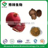 High Quality Natural Organic Pomegranate Bark Extract Powder