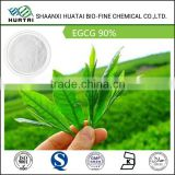camellia sinensis green tea extract for weight loss egcg 90% powder