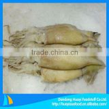 high quality fresh squid for sale