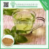 China wholesale gmp manufacturer high quality l-theanine 95% green tea extract