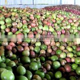 Fresh Passion Fruit/ Whole Frozen Passion Fruit/Organic Passion Fruit