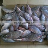 small size frozen tilapia fish block frozen 100-200g