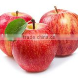 Fresh fruits Red star apple with good quality for sale                                                                         Quality Choice