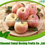 fresh fuji apple fruit for selling with lowest price